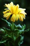 Flor de la cubierta de la escarcha Fotos de archivo libres de regalías
