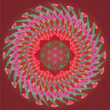 Flor de la edición de la primavera del germen de la vida mandala-para el diseño y el medita Foto de archivo libre de regalías