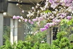 Flor de la flor en su árbol en primavera Fotos de archivo libres de regalías