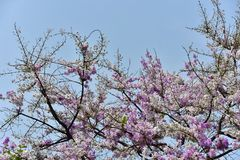 Flor de la flor en su árbol en primavera Fotos de archivo
