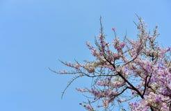 Flor de la flor en su árbol en primavera Imagenes de archivo