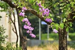Flor de la flor en su árbol en primavera Imagen de archivo