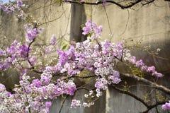 Flor de la flor en su árbol en primavera Fotografía de archivo