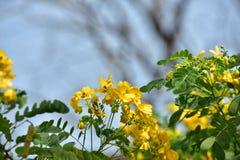 Flor de la flor en su árbol en primavera Foto de archivo libre de regalías