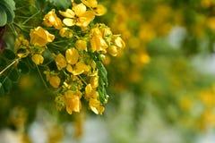 Flor de la flor en su árbol en primavera Imagen de archivo libre de regalías