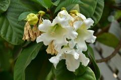 Flor de la flor en su árbol en primavera Fotografía de archivo libre de regalías