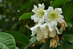 Flor de la flor en su árbol en primavera Imágenes de archivo libres de regalías