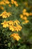 Flor de la estación de primavera Foto de archivo libre de regalías