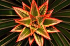 Flor de la estrella en izquierda Foto de archivo