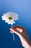 Flor de la explotación agrícola de la mano Foto de archivo