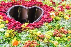 Flor de la flor Fotos de archivo libres de regalías