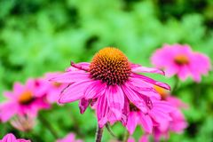Flor de la flor Foto de archivo