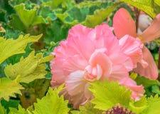 Flor de la flor Foto de archivo libre de regalías