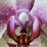 Flor de la flor de la orquídea imagen de archivo