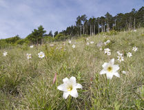 Flor de la flor del lirio con escénico hermoso. Imagenes de archivo
