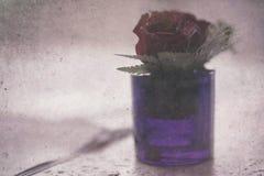 Flor de la flor en florero imágenes de archivo libres de regalías