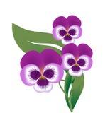 Flor de la flor violeta stock de ilustración