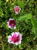 Flor de la flora de la flor Imágenes de archivo libres de regalías