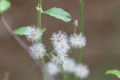 Flor de la floración Foto de archivo libre de regalías