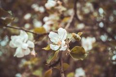 Flor de la fruta Fotografía de archivo