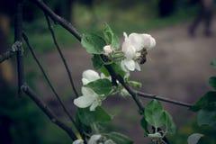 Flor de la fruta Imágenes de archivo libres de regalías