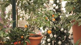 Flor de la fruta cítrica en el invernadero almacen de metraje de vídeo