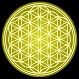 FLOR de la geometría sagrada de la VIDA Fotos de archivo