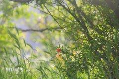 Flor de la granada en el fondo verde enorme Fotografía de archivo