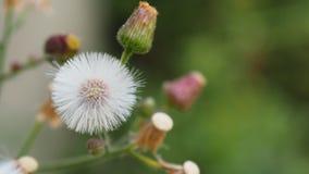 Flor de la hierba Imagen de archivo