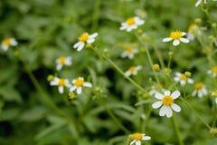 Flor 3 de la hierba imágenes de archivo libres de regalías