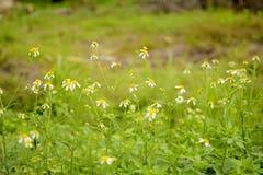 flor 2 de la hierba imagen de archivo
