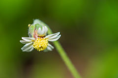 Flor de la hierba de la mañana Fotografía de archivo