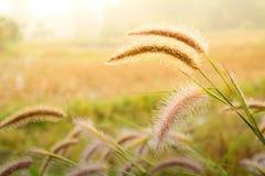 Flor de la hierba de la naturaleza Fotos de archivo