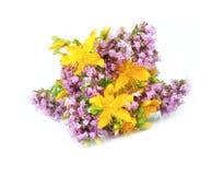 Flor de la hierba de San Juan y del Origanum Imagen de archivo libre de regalías