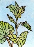 Flor de la hierba del cuento de hadas de la pintura de la acuarela Imagen de archivo libre de regalías