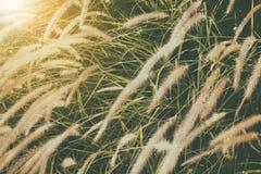 Flor de la hierba del estilo del vintage Fotografía de archivo