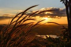 Flor de la hierba del primer con puesta del sol Imágenes de archivo libres de regalías