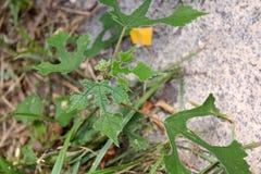 Flor de la hierba en roca Imagen de archivo libre de regalías