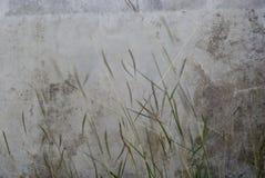 Flor de la hierba en viento Fotos de archivo