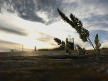 Flor de la hierba salvaje en la tabla de madera cubierta de musgo rústica vieja en el fondo de la luz del amanecer de la mañana C imágenes de archivo libres de regalías