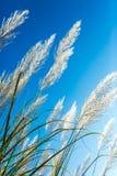 Flor de la hierba salvaje por la mañana Imagen de archivo