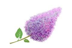 Flor de la lila en el fondo blanco. ilustración del vector