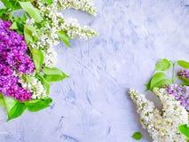 Flor de la lila en el marco concreto del fondo estacional imagenes de archivo