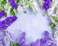 Flor de la lila en estacional hermoso del marco concreto del fondo fotos de archivo