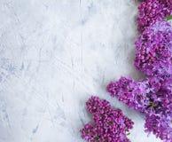 Flor de la lila en estacional hermoso del marco romántico concreto del fondo fotos de archivo