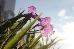 Flor de la mañana Fotos de archivo