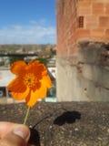 Flor de la mañana Imágenes de archivo libres de regalías