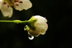 Flor de la mañana en el árbol Fotografía de archivo