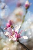 Flor de la magnolia Bandera de las flores Background Imágenes de archivo libres de regalías