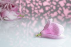 Flor de la magnolia en un tablero blanco imágenes de archivo libres de regalías